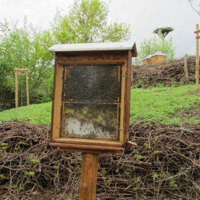 Lehrbienenstand Schaukasten