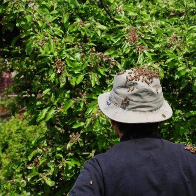 Schön im Busch versteckt